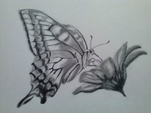 Vlinder kaat