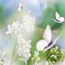 witte vlinders