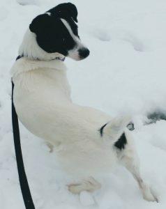 Tikkel sneeuw