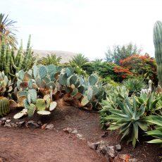Factor Afrika (Fuerteventura 2)