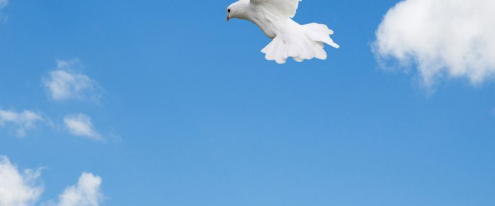 Vrijheid (4)
